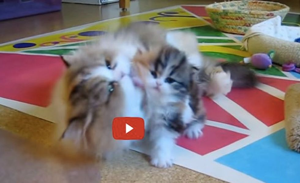 Momma Cat Gives Her Kitten a Power Wash. You Can't Escape it!