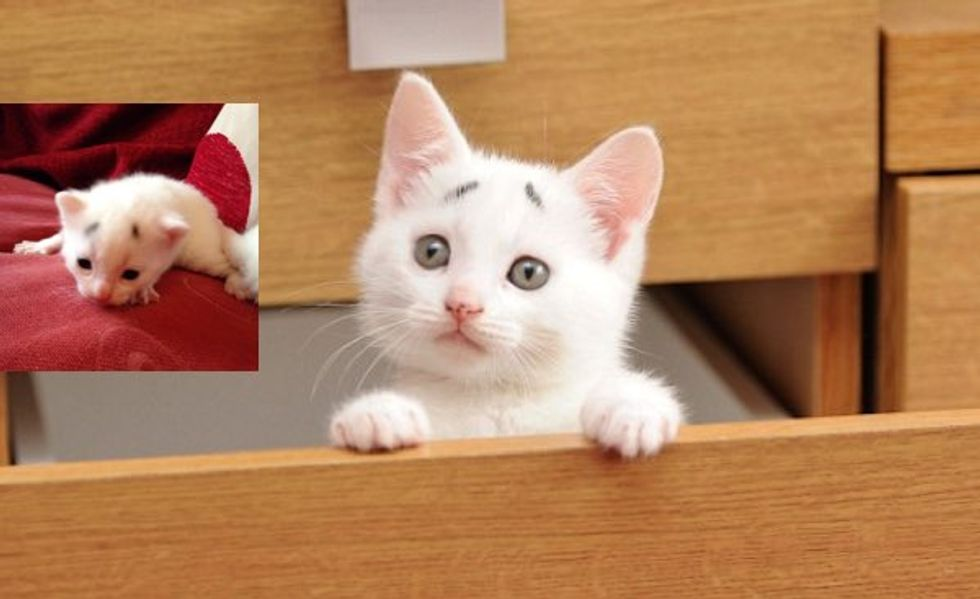 This Kitten Has a Permanent Concerned Look. Meet Gary the Kitty!