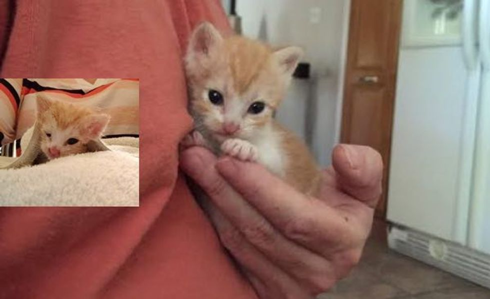 Cashew the Kitten Abandoned No More! What a Difference Rescue Can Make!