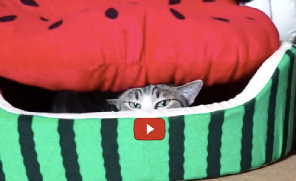 See How Kitty Launches a Sneak Attack from Her Giant Watermelon Bed...