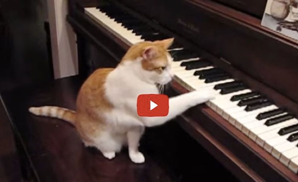 This is Bill the Cat Playing Piano for His Mom! He Knows He's Talented!