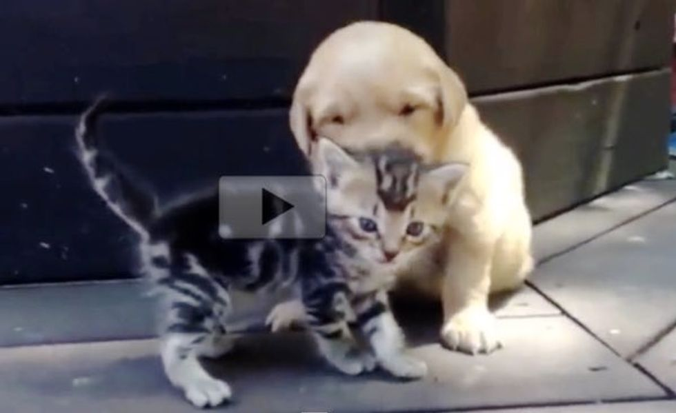 Kitten Has a Little Admirer Who Can't Stop Giving Her Puppy Kisses