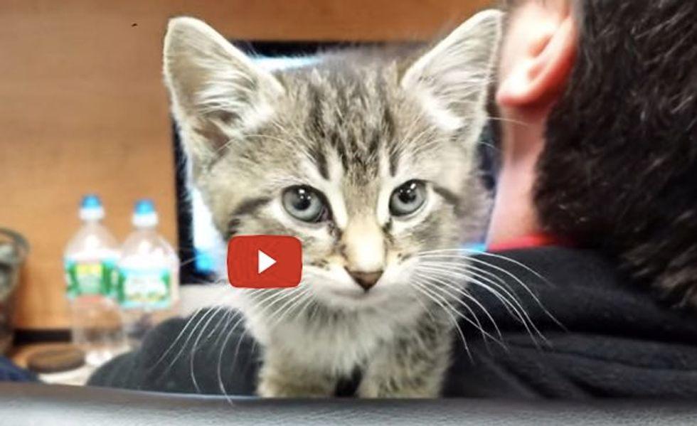 Office Kitten Mews Like a Broken Squeaky Toy