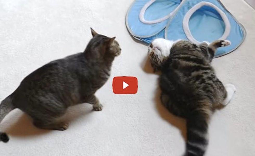 Maru and Hana Rumble on the Mat