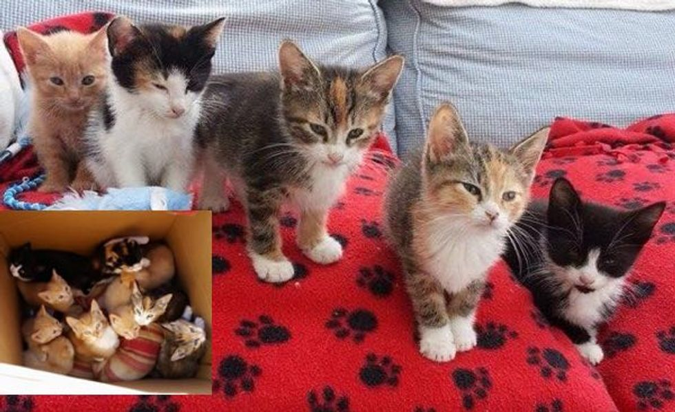10 Kittens Found in a Large Toy Box Now Living a Good Life