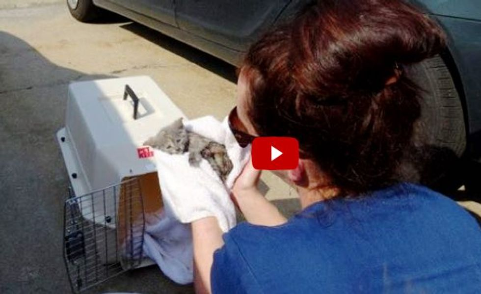 Incredible Raw Footage of Kitten Freed from Drain Pipe by Firefighters.