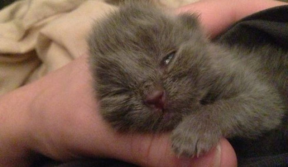 Baby Kitten Saved from Yard is Now Happy and Loved