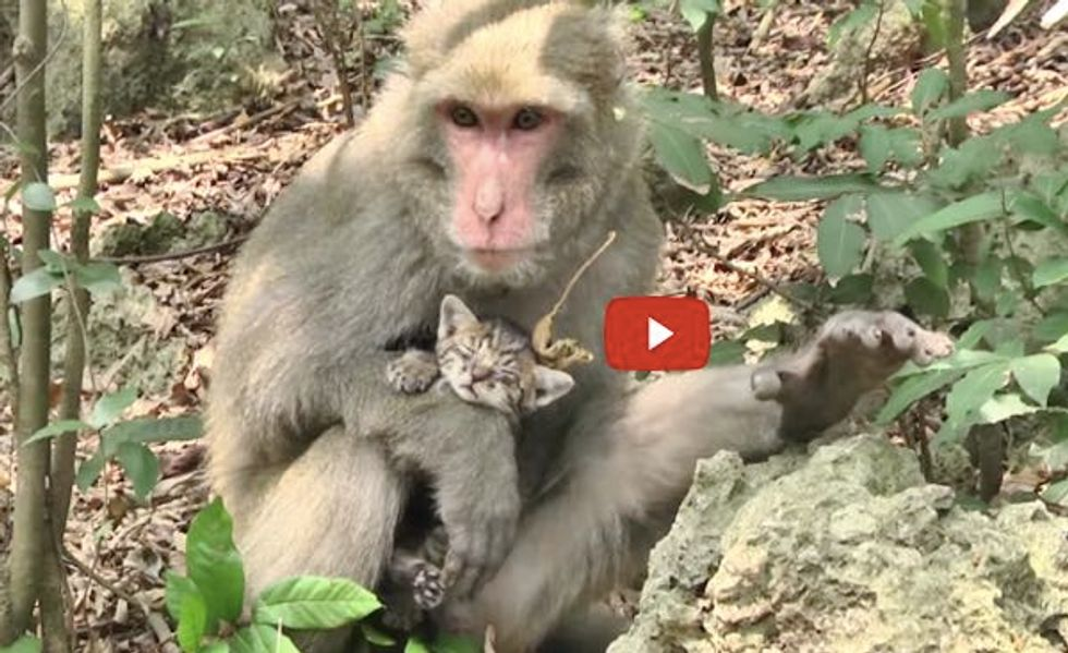 Man Teams Up with a Monkey Saving Abandoned Kittens