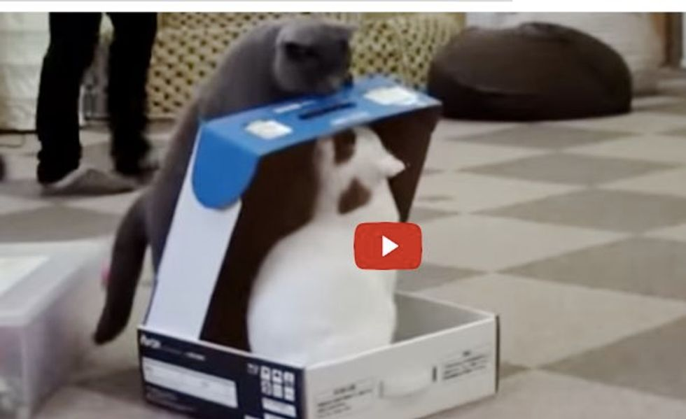 When this Cat Finds Another Kitty Sitting in a Purrfect Cat Trap...