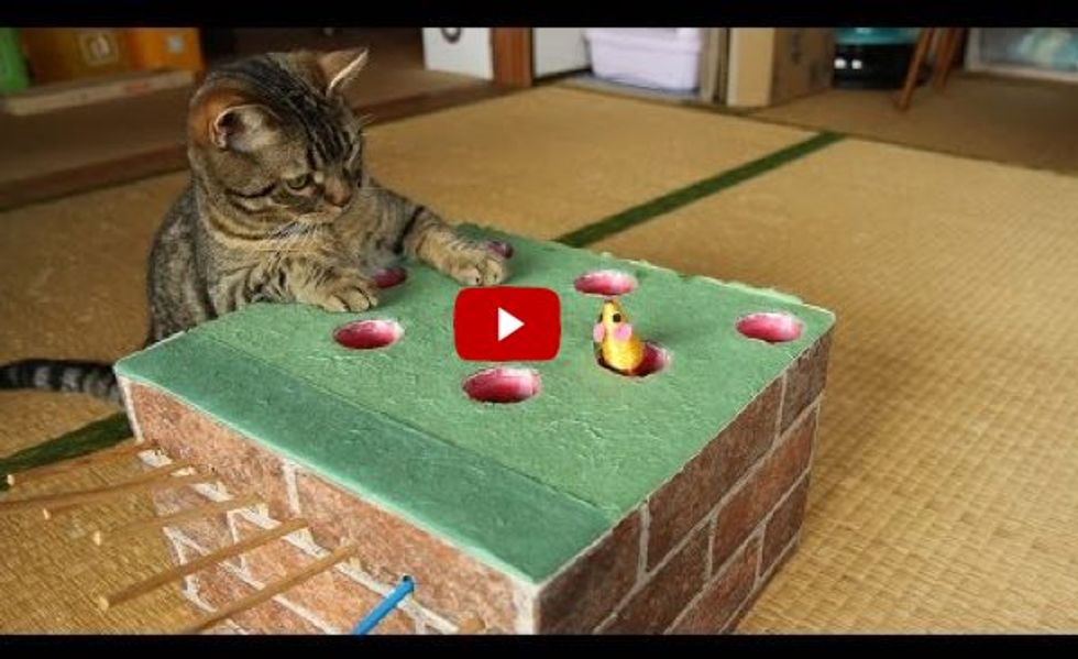 Cats Trying Out a Home-made Whack-a-Mole! This is Brilliant!
