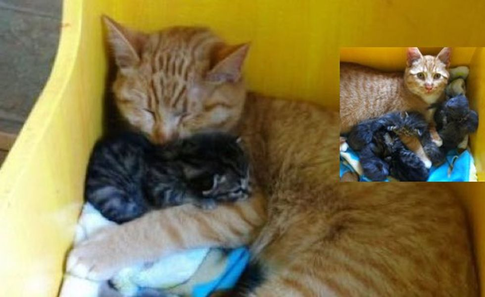Male Cat With Special Needs Nurtures Litter of Orphaned Kittens