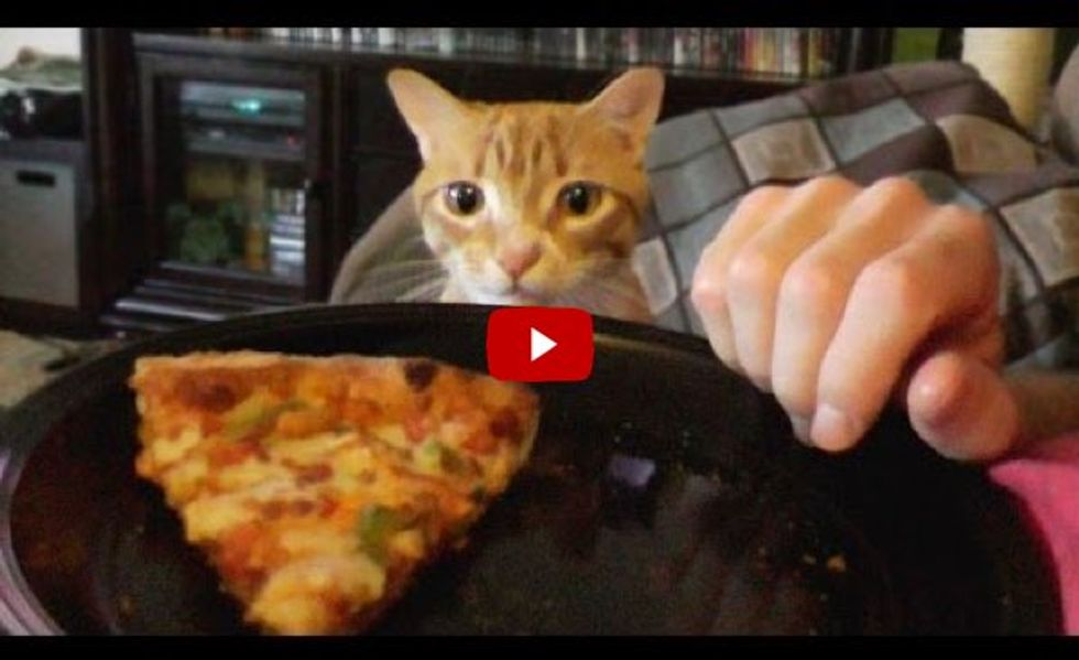 Trying To Eat with a Cat Around! The Struggle is Real!