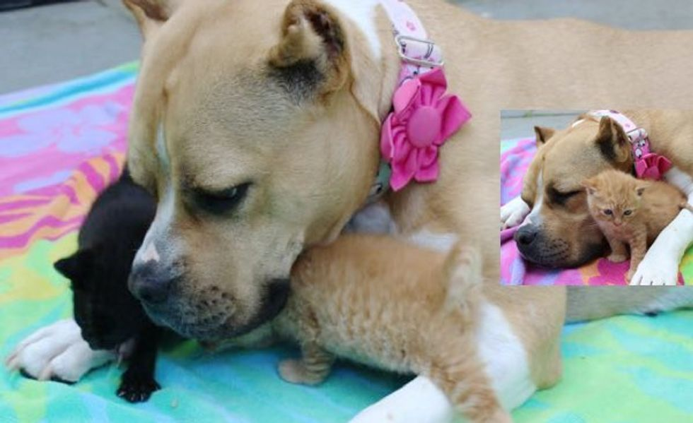 Homeless Kittens Find a Rescue Dog to Be Their New Mom!