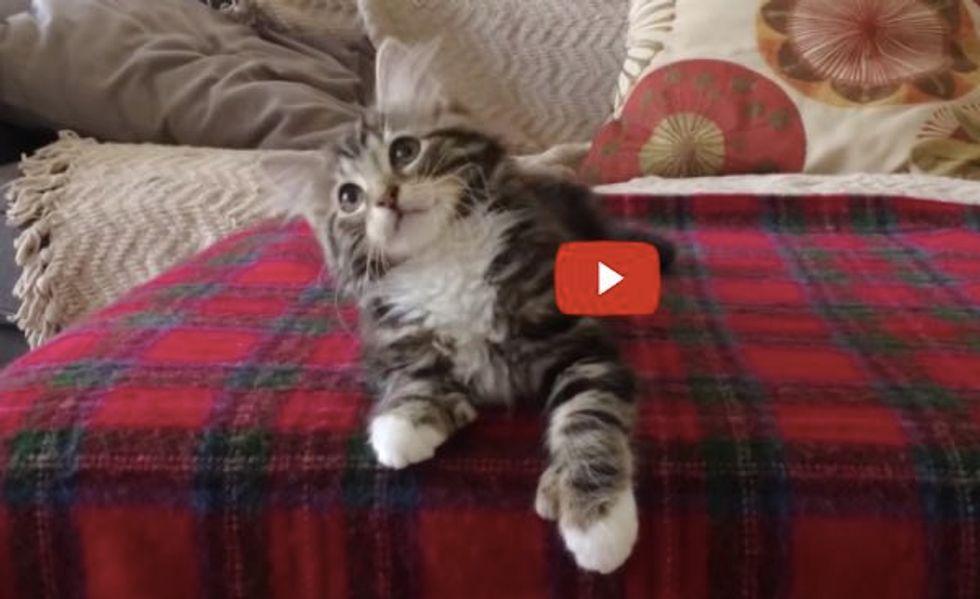 "Uptown ""Kitty"" Funk! (adorable kitten dancing to Mark Ronson & Bruno Mars - Uptown Funk)"