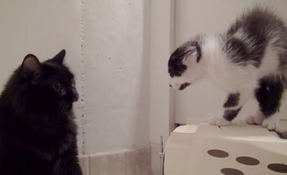 See How They Were Introduced and Became Best Friends. Love the Ending!