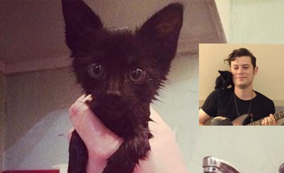 These Musicians Rescue and Care for an Abandoned Kitten While on Tour. Meet Lil Trucker!