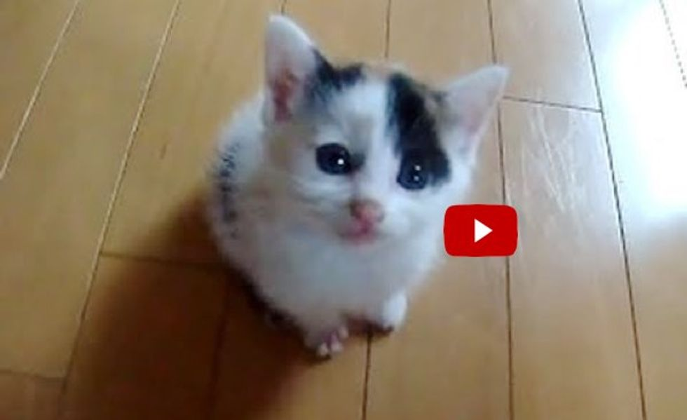 This Tiny Calico Kitty Could Crack Even the Hardest Heart!