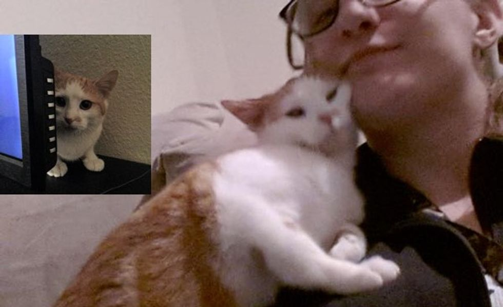 This Cat Goes from the Biggest Scaredy Kitty to the Most Loving Cat