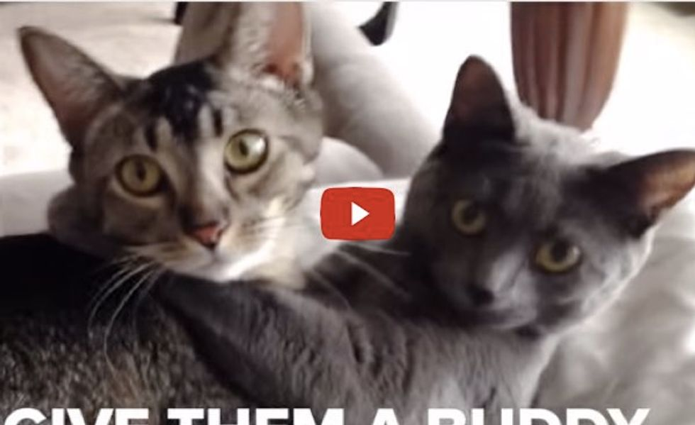 These are Pretty Good Reasons Why We Need a Second Cat!
