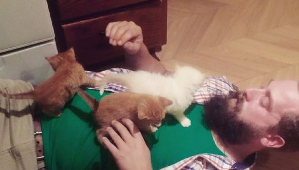 Bearded Guy Becomes Dad to Three Tiny Feral Kittens!