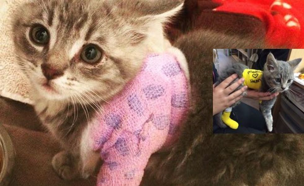 Help Little Henry the Warrior Kitty Recover!