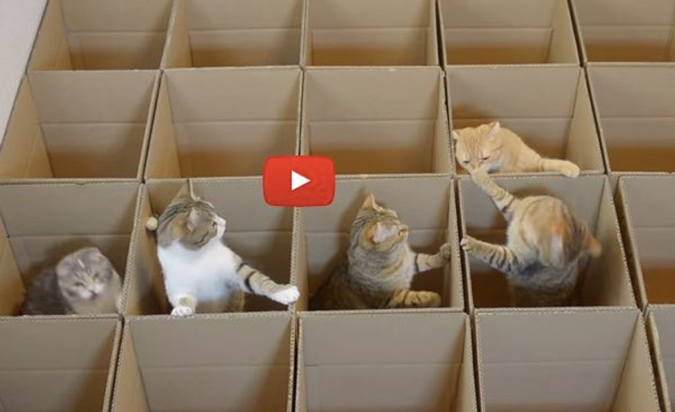 They Built a Grid of Boxes for Their 9 Cats! The Fun is Endless!