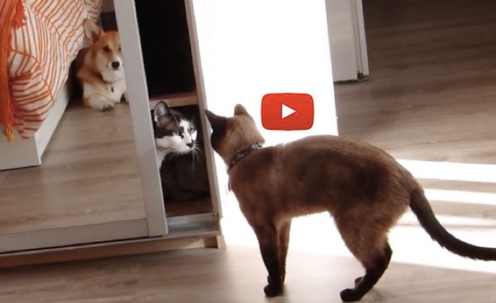 """This Kitty Tries to Obtain Some Privacy by """"Locking Himself in"""" the Closet..."""