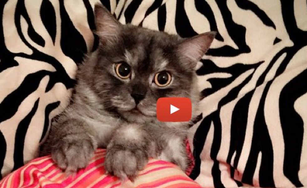 This Cat Runs to the Sink the Minute Her Human Turns on the Faucet!