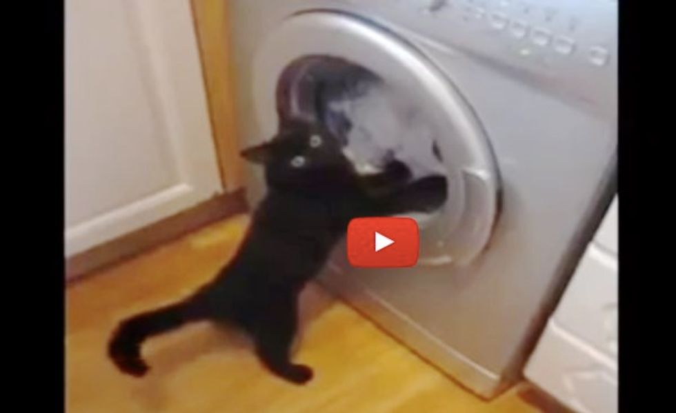 This Ninja Cat is Trying to 'Rescue' Clothes from Crazy Spinning Machine!