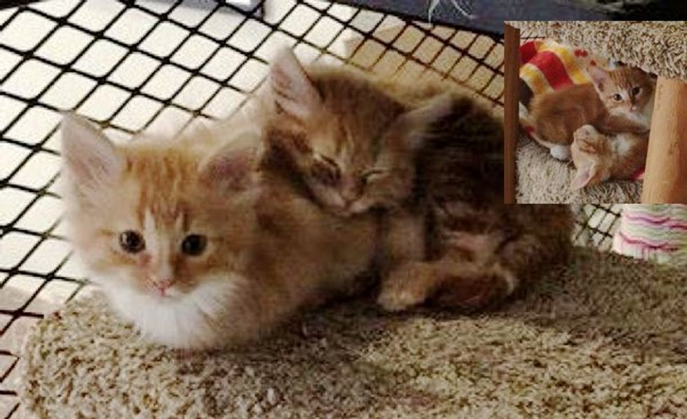 Office Sets Up 'Cat Library' for Rescue Kitties. Employees Can Hang out With Them and Help Them Find Homes!