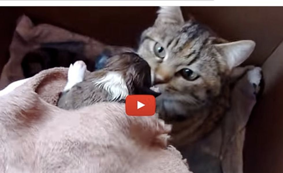 Momma Cat Hears a Baby Pup Crying. Her Reaction is Just Precious!