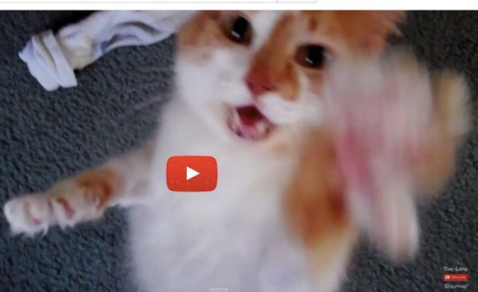 Meet Gizmo the Cat! He Speaks Kitty but Understands Human!