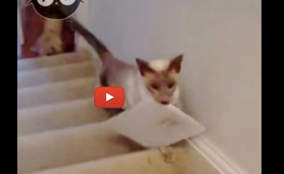 Frankie the Cat Gets Mail for His Human Mom Every Day!