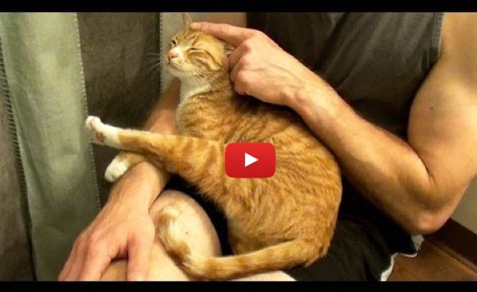 Marmalade the Cat Doesn't Like Hugs Unless This Happens...