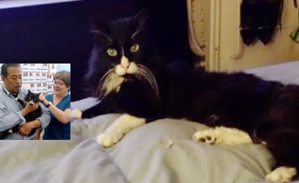 Buddy the 23-year-old Cat Reunited with His Human! There's More to the Story...