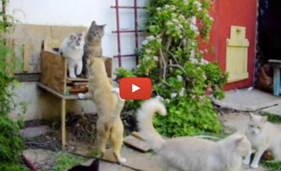 Man Turns His Home into Haven for Feral Cats and Tames Them for Chance at Better Life