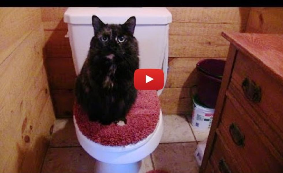This is Why the Human Can Never Use the Bathroom Alone! Can You Relate?