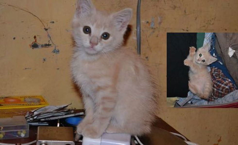 A Kitten Rescued from a Slum in Kenya, His Journey Then and Now!
