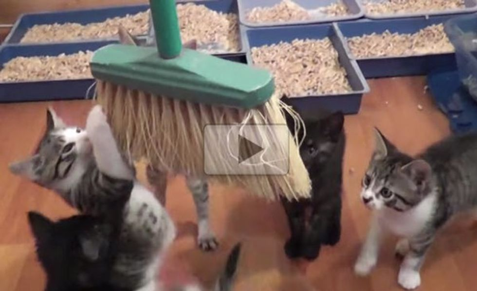 This is Why They Rarely Sweep with All These Kittens in the House!