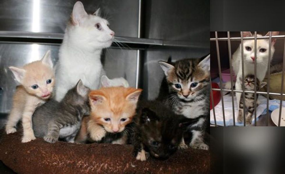 Rescue Stray Cat Gave Birth to Three Kittens But Ended Up with Six Babies!