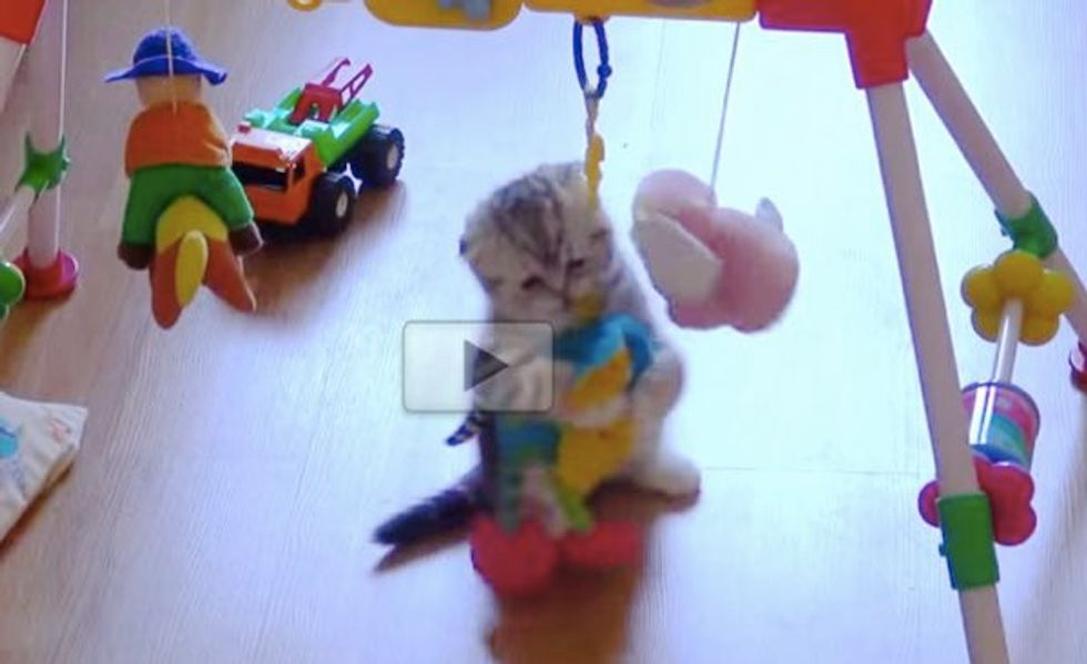 This Kitten is Having More Fun With the Baby Toys Than His Little Humans!