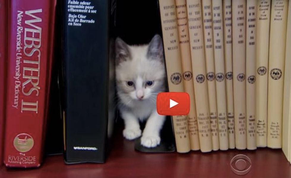 These Kitty Librarians at an Office Building Don't Offer Books, What They Offer is So Much Better!
