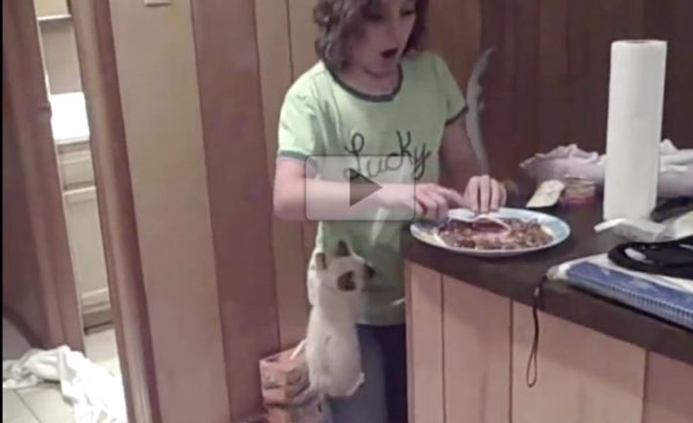 Kittens Have Zero Patience When It Comes to Food Time!