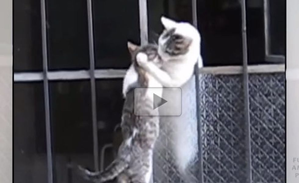 Mother Cat Helps Her Kitten Climb Back Inside the House