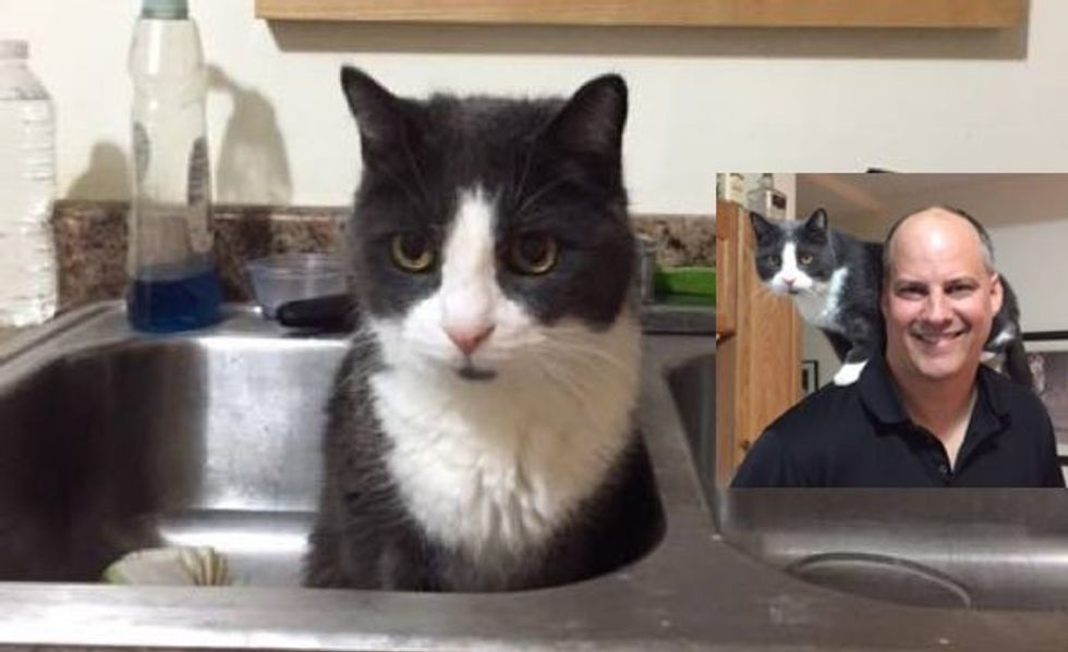 18 Year Old Cat Was Not Too Old to Find His Forever Loving Home!