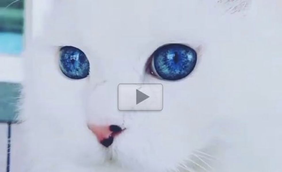 Stunning Cat with the Most Gorgeous Eyes I've Ever Seen!
