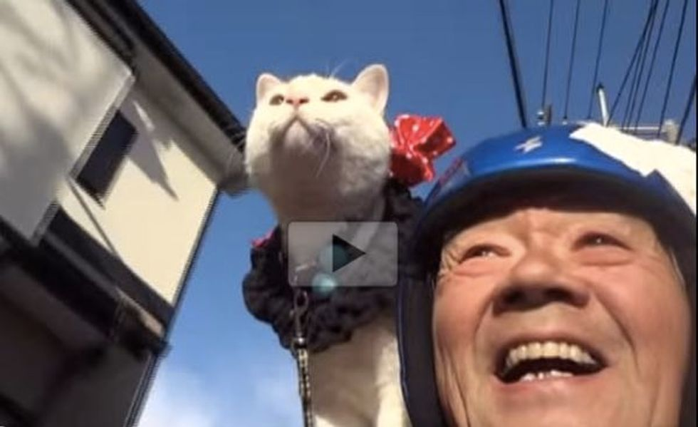 This Cat and His Old Man Go Motorcycling Together! Made My Day Completely!