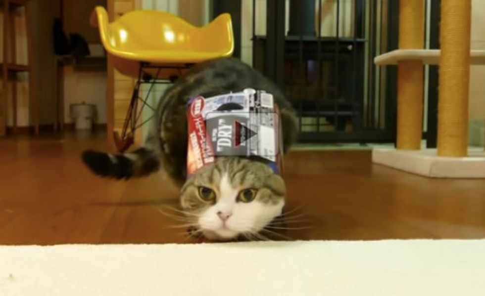 Does the Box Become Part of Maru OR Does Maru Become Part of the Box?