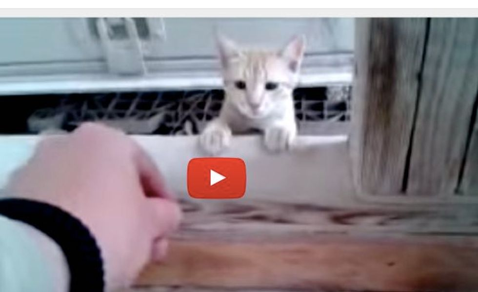 This Man is Overjoyed When a Stray Kitten He's Been Feeding Finally Lets Him Pet Her!