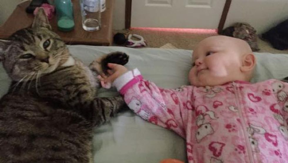 Kitty Found His Human Mom When She was Pregnant. Now He and the Little Baby are Inseparable!